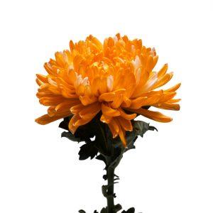 Orangeweb2