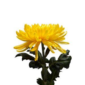 Yellowweb3