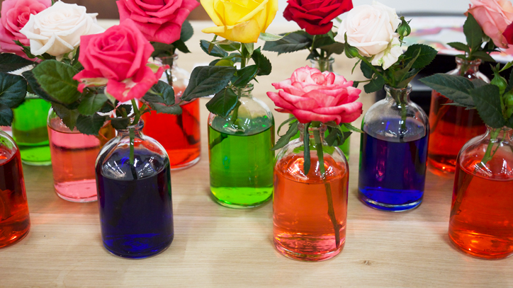 Glass bottles of vase color