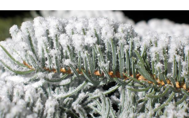 White artificial snow